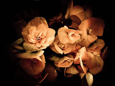 Photograph - Peach Begonia In Shadows - Vintage Photography by Chantal PhotoPix