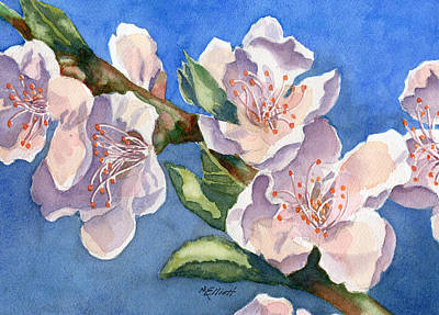 Peach Blossoms Print by Marsha Elliott