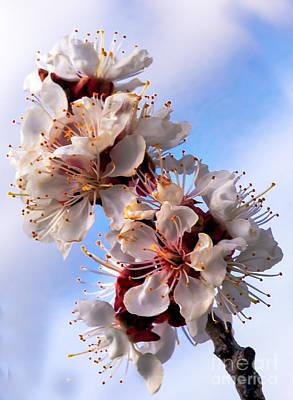 Photograph - Peach Blossoms by Robert Bales
