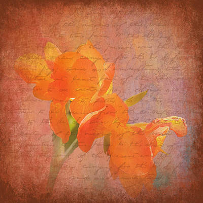 Photograph - Peach Dream by Trudy Wilkerson