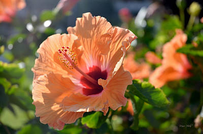Photograph - Peach Hibiscus by Marie Hicks