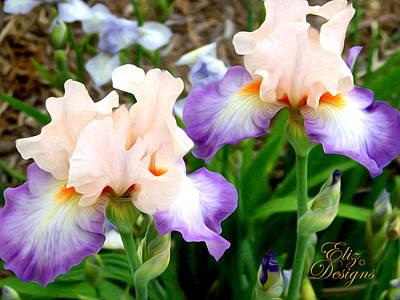 Peach Iris Lovlies Original by Elizabeth Eells