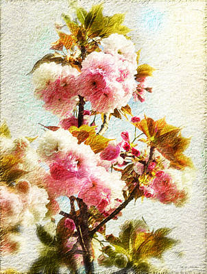 Peach Tree Blossom Art Print by Heinz G Mielke