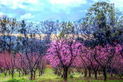 Peachy Blossum Scene2 Art Print