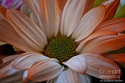 Photograph - Peachy Petals by Susan Herber