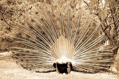Nature Photograph - Peacock Back by Elena Melnikova