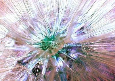 Birds Rights Managed Images - Peacock Dandelion - Macro Photography Royalty-Free Image by Marianna Mills