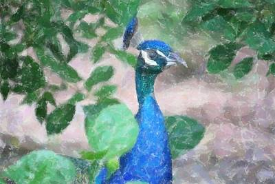 Art Print featuring the photograph Peacock by Donna  Smith