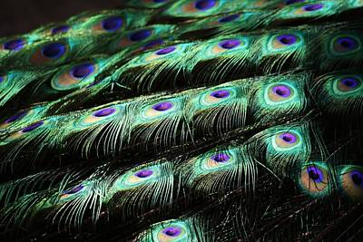 Peacock Feathers Art Print by Paulette Thomas