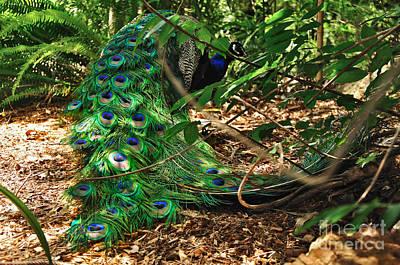 Photograph - Peacock Hiding by Kaye Menner