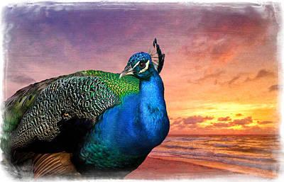 Peacock In Paradise Art Print by Debra and Dave Vanderlaan