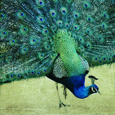 Peacock Pride Art Print by Linde Townsend