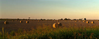 Peanut Field Bales At Dawn 1 Art Print by Douglas Barnett