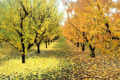 Print featuring the photograph Pear Orchard In Fall by Katie Wing Vigil