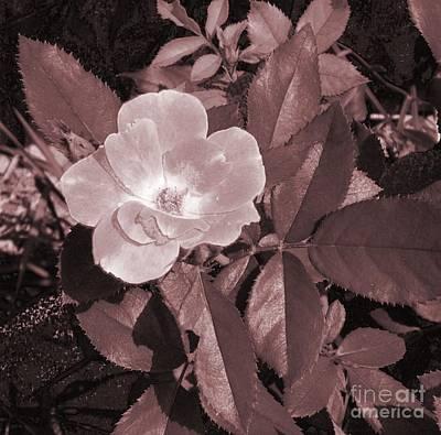 Pearl Rose Art Print