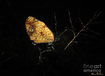 Photograph - Pearly Crescentspot Butterfly II by Donna Brown