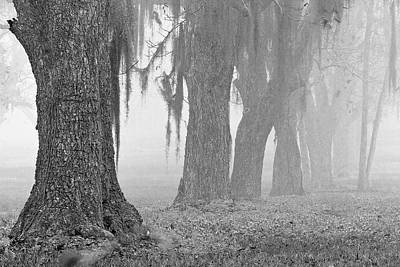Photograph - Pecan Grove 2 by Dan Wells