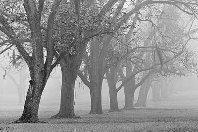 Photograph - Pecan Grove by Dan Wells