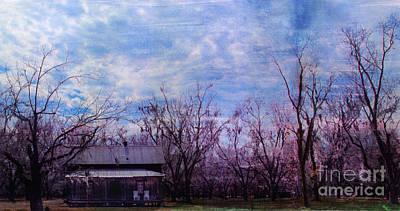 Photograph - Pecanderosa by Bob Senesac