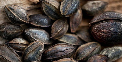 Photograph - Pecans Together by Wilma  Birdwell