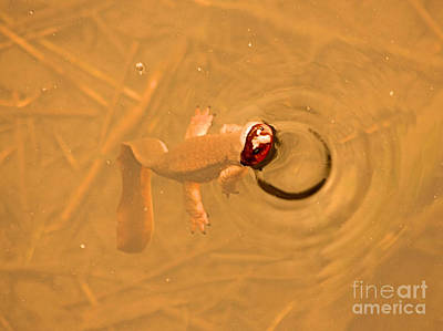 Newts Photograph - Peek A Boo Newt by Nick Gustafson