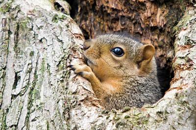 Photograph - Peekaboo Squirrel by Steve Stuller