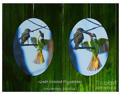 Flycatcher Digital Art - Peeking Through The Fence by Barbara Bowen