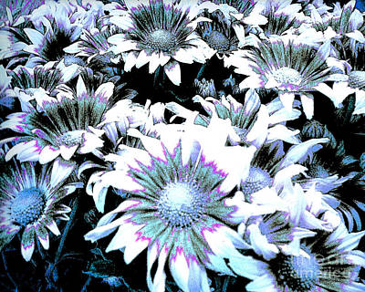 Photograph - Peele Mums - Floral Digital Computer Art by Merton Allen