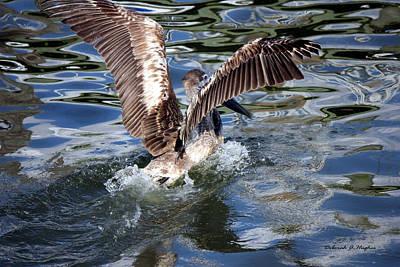 Photograph - Pelican 4 by Deborah Hughes