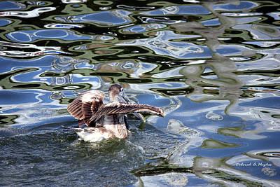 Photograph - Pelican 5 by Deborah Hughes