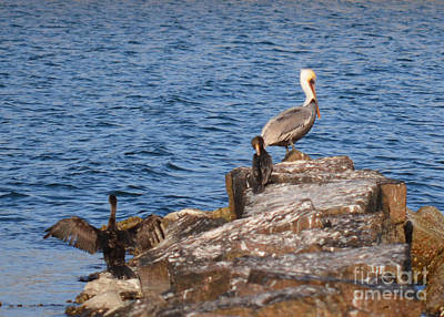 Photograph - Pelican And Cormorants by Donna Brown