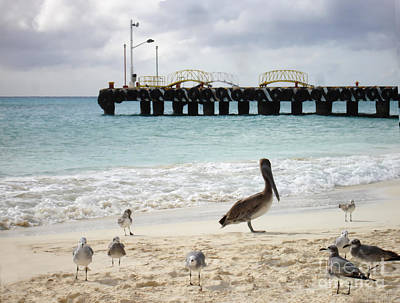 Photograph - Pelican And Seagulls On The Beach In Playa Del Carmen - Mexico. by Renata Ratajczyk