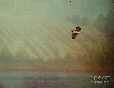 Pelican Art Print by Billie-Jo Miller