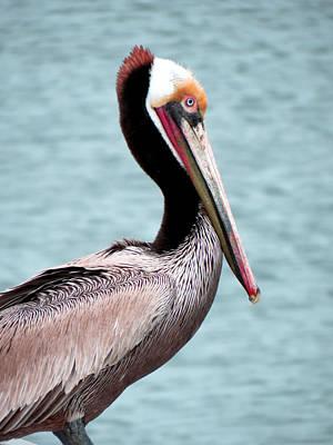 Monterey Wharf Painting - Pelican by Diane Wood