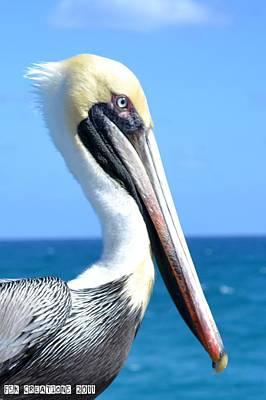 Pelican Art Print by Fern Korn