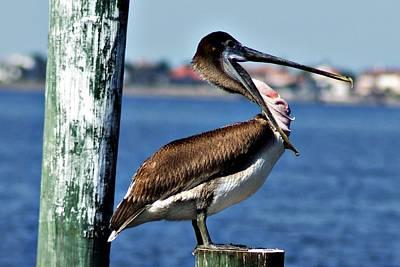 Photograph - Pelican II by Joe Faherty