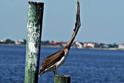 Photograph - Pelican IIi by Joe Faherty
