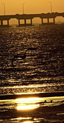 Pelican In Flight Golden Sun Art Print by John Wright