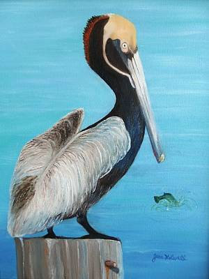 Painting - Pelican by June Holwell