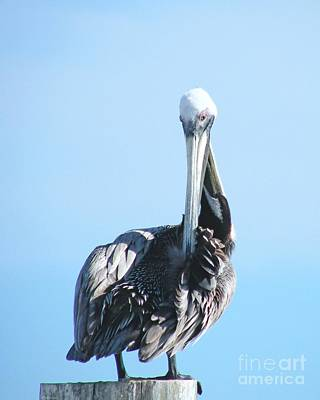 Digital Art - Pelican by Lizi Beard-Ward