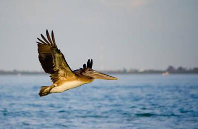 Pelican Art Print by Mike Rivera