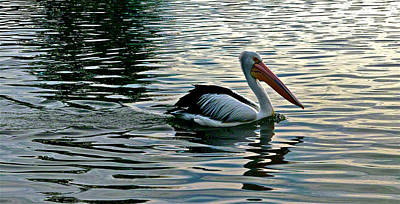 Photograph - Pelican On A Mission by Jocelyn Kahawai