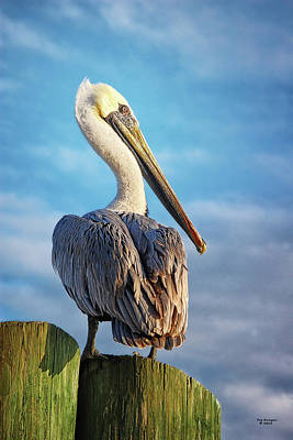 Photograph - Pelican On Pilings by Peg Runyan