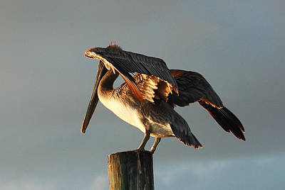 Photograph - Pelican On Post 3 by Roger Soule