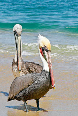 Photograph - Pelican Pair by Jean Noren
