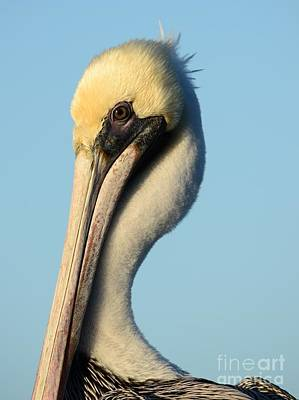 Photograph - Pelican Portrait by Lynda Dawson-Youngclaus