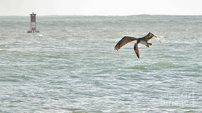 Fort Pierce Inlet Photograph - Pelican Pouch by Lynda Dawson-Youngclaus