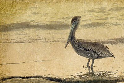 Pelican Art Print by Rebecca Cozart
