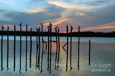 Art Print featuring the photograph Pelican Resting End Of Day by Dan Friend