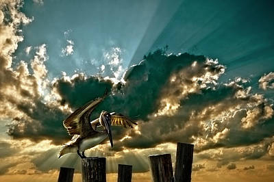 Pelican Sky Art Print by Meirion Matthias